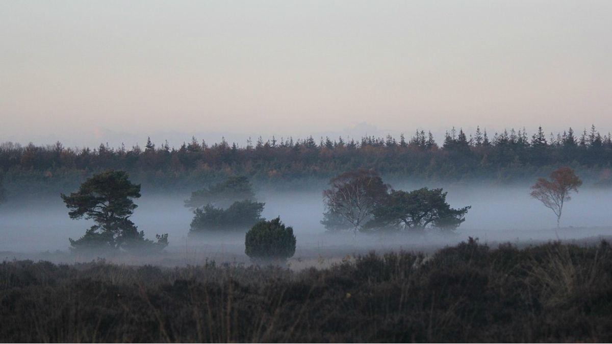 Veluwe_landschap